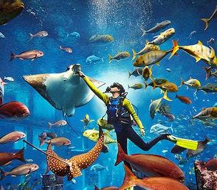 Atlantis Marine Animal Adventures