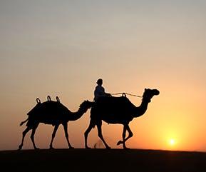 Dubai Camel Safari