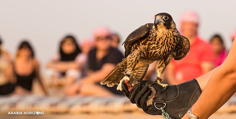 Heritage Falconry with Wildlife Drive